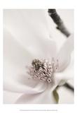 Magnolia Blush II Prints by Christine Zalewski