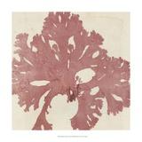 Brilliant Seaweed V Print