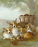 Apple Dumpling Prints by Ruane Manning