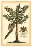 British Colonial Palm II Obrazy