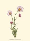 Delicate Wildflowers V Prints