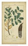 Vintage Turpin Botanical VII Giclee Print by  Turpin