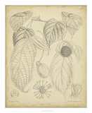 Vintage Curtis Botanical III Prints by Samuel Curtis
