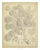 Vintage Curtis Botanical IV Prints by Samuel Curtis