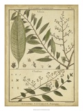 Diderot Antique Ferns I Giclee Print by Daniel Diderot