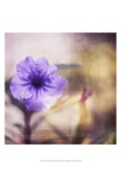 Purple Tranquility I Prints by Emily Robinson