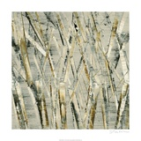 Birches V Premium Giclee Print by Sharon Gordon