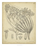 Vintage Curtis Botanical VI Prints by Samuel Curtis