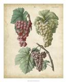 Calwer Grapes II Giclee Print by  Calwer