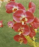 Island Orchid I Prints by Chariklia Zarris