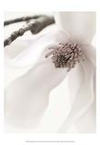 Magnolienröte I Poster von Christine Zalewski