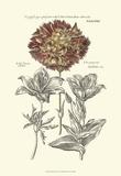 Tinted Floral IV Art by Besler Basilius