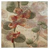 Desert Botanicals I Prints by John Butler