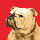 The British Bulldog, Red Prints by  The Vintage Collection