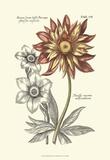 Tinted Floral III Posters by Besler Basilius