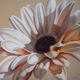 White Gerbera Prints by Carolina Alotus