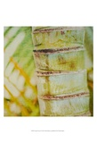 Tropical Texture II Posters by Emily Robinson