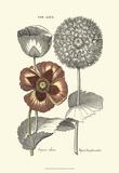 Tinted Floral II Prints by Besler Basilius