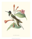 Hummingbird and Bloom IV Giclee Print by  Mulsant