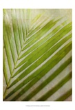 Elegant Frond II Posters by Emily Robinson