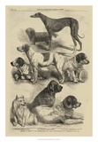 International Dog Show I Poster