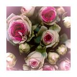 Rosen Poster von Katja Marzahn