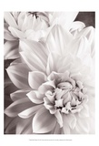 Black and White Dahlias II Print by Christine Zalewski