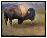 Bison Portrait II Poster von Chris Vest