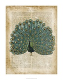 Antiquarian Birds V Posters