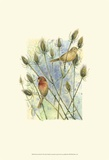House Finches Art by Janet Mandel