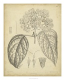 Vintage Curtis Botanical I Prints by Samuel Curtis