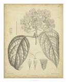 Vintage Curtis Botanical I Giclee Print by Samuel Curtis