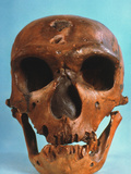 Neanderthal Skull Photographic Print