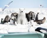 Frozen Planet Posters