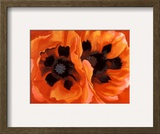 Oriental Poppies Prints by Georgia O'Keeffe