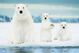 Polar Bears-Family Psters