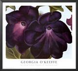 Petunias negras y púrpuras|Black and Purple Petunias Láminas por Georgia O'Keeffe