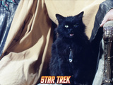 "Star Trek: The Original Series, ""Catspaw"" Photo"