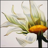 Daisy Breeze Mounted Print by Carolina Alotus