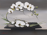 Happiness of White Orchids I Posters af Olivier Tramoni