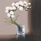 Swirls of White Orchids I Poster par Olivier Tramoni