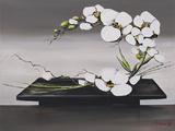 Olivier Tramoni - Happiness of White Orchids II - Reprodüksiyon