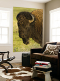 Bison Bull at the National Bison Range, Montana, USA Print by Chuck Haney