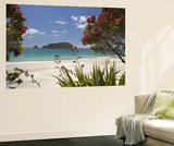 Pohutukawa Tree in Bloom and Hahei, Coromandel Peninsula, North Island, New Zealand Affiches par David Wall