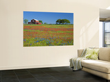 Paintbrush Flowers and Red Barn in Field, Texas Hill Country, Texas, USA Posters by Adam Jones