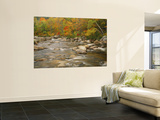 River Flowing Trough Forest in Autumn, White Mountains National Forest, New Hampshire, USA Print by Adam Jones