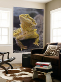 Bearded Dragon Prints by Adam Jones