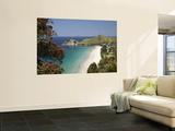 Pohutukawa Tree in Bloom and Hahei, Coromandel Peninsula, North Island, New Zealand Posters by David Wall