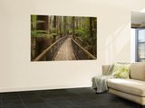 Tall Trees Walk, Mount Field National Park, Tasmania, Australia Prints by David Wall