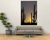 Saguaro Cacti, Organ Pipe National Monument, Arizona, USA Poster by William Sutton